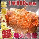 ジャンボ毛蟹 1尾800g 超特大 最高ランクの堅かに 【毛ガニ】【毛蟹】【毛がに】【かに】【…