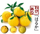 愛媛みかん職人「はるか」訳あり10kg ファミリー ギフト 果物 フルーツ 減農薬