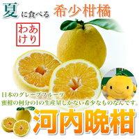 【送料無料】河内晩柑大玉10kg