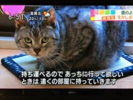 「猫ホイホイ畳(R)」[純国産いぐさ]猫転送装置「猫ほいほい畳」「ねこホイホイ畳」商標登録済〜【和風】【畳】