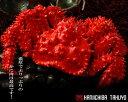 北海道から海鮮グルメお取り寄せ!!道東名物活花咲かにオス どか盛セット!2.0kg詰 1箱【楽ギフ...