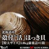 活だから旨さが違う!北海道産殻付「活」ほっき貝【特大サイズ】3.0kg前後詰×1箱