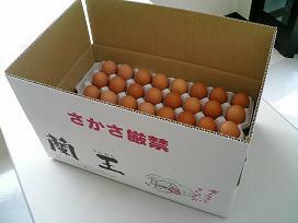 卵, 鶏卵  M 5kg596620