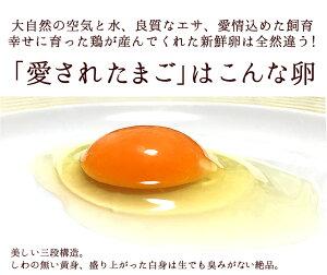 ポイント10倍!(5/2720:00~6/11:59)卵緑の一番星飲んでも美味!甘く濃厚生臭さ無アローカナが進化!大黄卵鶏が産む薄緑殻の栄養タマゴ!アスタキサンチンα-リノレン酸30%黄身肉体改造トレーニング筋トレダイエット生卵を飲む方に18個入ご自宅用10P27May16