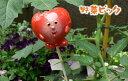 お茶目な表情のやさいピック♪野菜プランターにどうぞやさいピック (キャベツ・ゴーヤ・トマ...