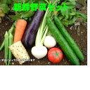 新鮮なミニ野菜セット♪美味しいぬか漬けに!!ミニ野菜セット