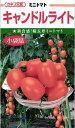ミニトマト 種 『キャンドルライト』 100粒 カネコ種苗