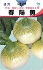 極早生タマネギ 種 『春陽黄』 20ml 丸種
