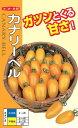 プラム型ミニトマト種『カナリーベル』500粒ナント種苗