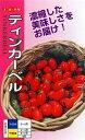 プラム型ミニトマト種『ティンカーベル』500粒ナント種苗