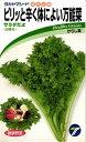 カラシナ 種 『サラダだよ』 小袋(8ml) タカヤマシード