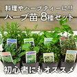 ハーブ苗 8種セット 料理・ハーブティー向きの育てやすい多年草ハーブ