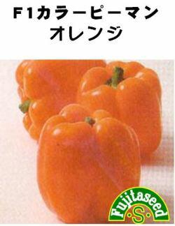 藤田種子 パプリカ カラーピーマン オレンジ 小袋