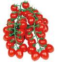 丸種 ミニトマト 甘っこ1000粒