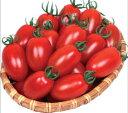 丸種 ミニトマト なつめっ娘200粒