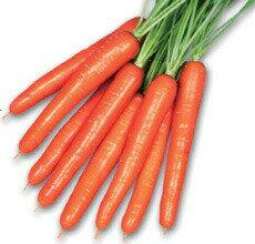 種子, 野菜の種子  1000
