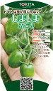 トキタ種苗 ミニトマト しましまみどり100粒
