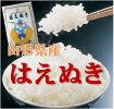 【送料無料】山形県産はえぬき精米10kg
