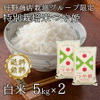 【28年産】【送料無料】【生産者限定特別栽培米】山形県河北町産 つや姫 白米 10kg(5kgx2)