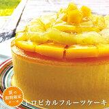 夏季限定 トロピカルフルーツケーキ 14cm 4.5号バースデーケーキ 誕生日ケーキ 夏 ひんやりスイーツ ギフト 贈り物 プレゼント