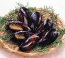 [冷凍]殻付ムール貝約500gパエリアや地中海料理にはかかせません[冷凍食品][5,250円以上で送料...