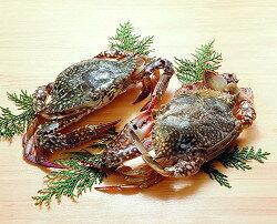 ワタリ蟹2ハイ入<通年> 輸入 冬もの食材 季節の食材 【冬商材】【冷凍食品】【業務用食材】【8640円以上で送料無料】