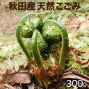 秋田 山菜