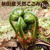 天然山菜盛合せ1kg[ご予約受付中!5月上旬〜発送予定]秋田産しどけ葉わさびこごみたらの芽わらびふきのとうねまがり竹あいこ山うど山菜セット採りたてお取寄せ山の幸