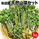 天然山菜盛合せ1kg[2020年ご予約 5月出荷] 秋田産 ...
