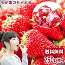 イチゴ農家さんからの直送品ひんやり 紅ほっぺ 1kg〜国産