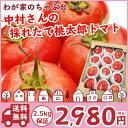 トマト農家さんからの直送品桃太郎ヨークトマト たっぷり2.5kg保証で詰め合わせ〜国産 桃太郎トマト トマト 野菜 送料無料 訳あり