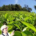【10倍】紅茶 茶葉 セット ダージリン飲みくらべセット♪ 【送料無料】