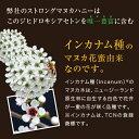 マヌカハニー 500g 定期 オーガニック 楽天最高峰  MGO(R)860+【活性強度31+】日本人養蜂職人生産による産地直送品。