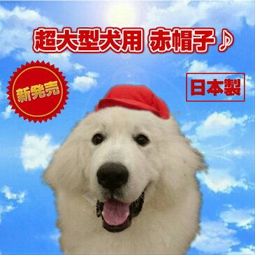 【犬 服】運動会 帽子 日本製 赤帽子 超大型犬 GP!GP! 運動会応援♪グレートピレニーズ バーニーズ ハロウィン インスタ映え コスチューム【RCP】