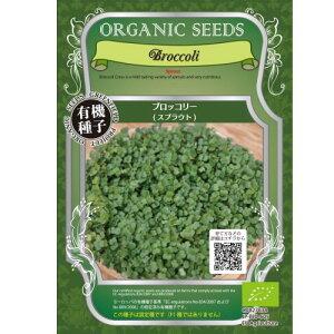 種まきから1週間、マイルドな味わいで栄養豊富なスプラウト固定種・有機スプラウトの種 ブロッ...
