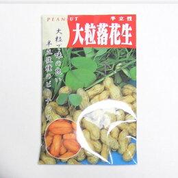 在来固定種野菜の種「大粒落花生」80ml〔約50粒〕畑懐〔はふう〕