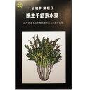 在来種/固定種/伝統野菜の種 晩生千筋京水菜5ml約1500粒/畑懐〔...