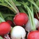 ラディッシュミックスのタネ約200粒入り 無農薬・無化学肥料・固定種 たねの森【メール便可】