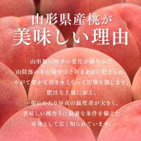 山形県産桃の美味しい理由