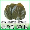 そのまま使える柿の葉 500枚 天極堂 和食 和菓子 柿の葉寿司 飾り葉 敷き葉 洗浄 一枚洗