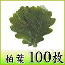 柏葉 100枚 天極堂 緑 和菓子 柏餅 柏餅の葉 端午の節句 こどもの日