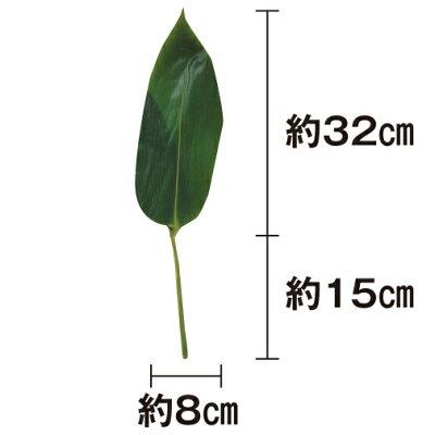 笹の葉 軸付 50枚 天極堂 青笹 国産 飾り葉 敷き葉 ちまき 端午の節句 画像2