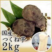 【国産つくね芋 2kg】丁寧に選別、箱詰めされた国産のやまいも