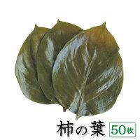 天極堂)柿の葉塩漬け50枚(業務用食材、和食、製菓材料、和菓子、和食卸)