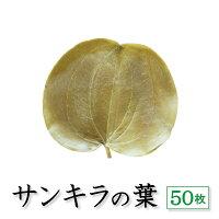 【サンキラ葉50枚】丁寧に選別された美しいサンキラの葉