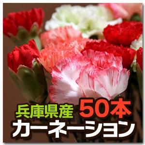 カーネーション 50本 花束 切り花 生花