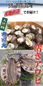 天然物 活きアワビ 1kg 活きサザエ 2kg 玄界灘 壱岐 獲れたて 直送!!