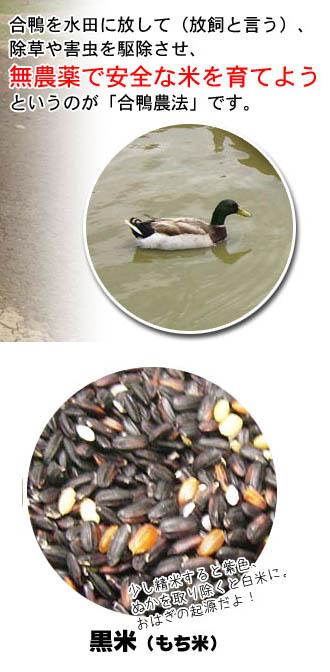 黒米7割、緑米、赤米が3割程度まざつております。一支国 原の辻遺跡 合鴨農法無農薬 古代 黒米 30kg  壱岐 [長崎県]:天下御免(マル秘の焼酎、特産品)