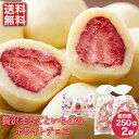 【送料無料】贅沢まるごといちごのホワイトチョコ500g(250g×2) / 送料