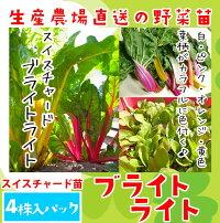 【生産農場直送】フダンソウスイスチャードブライトライト4株入りパック葉菜苗【人気】